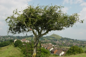 53 Thorn Tree
