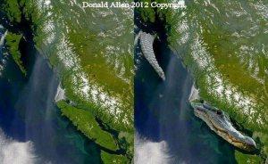 Vancouver Island Alligator